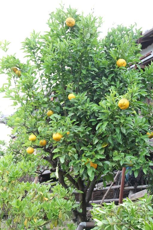 2015.06.橙