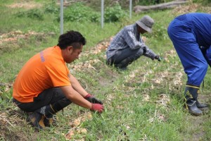 2015.06.13.収穫祭03