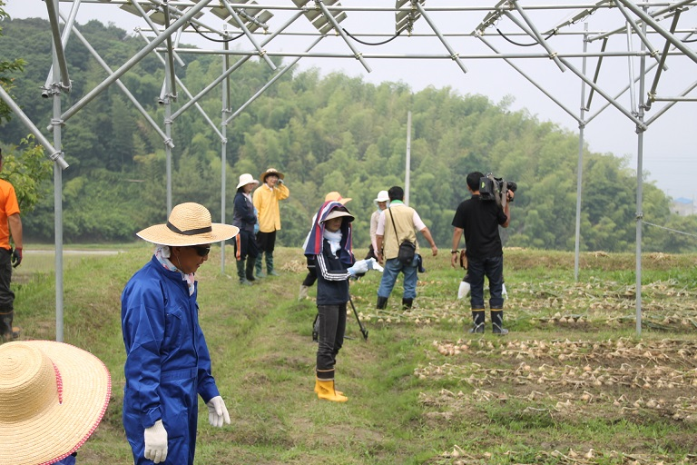 2015.06.13.収穫01