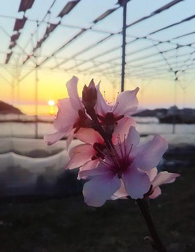 淡路島ソーラーファーム